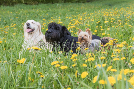 group of dogs lying at the