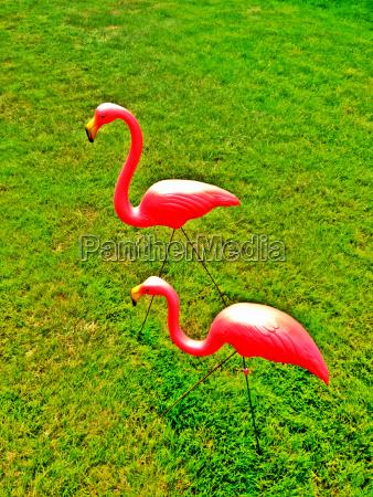 stilleben farbe tier vogel wild sommer