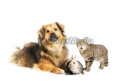 hund katze und kaninchen im studio