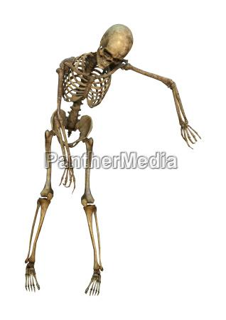 3d rendering mensch skelett auf weiss