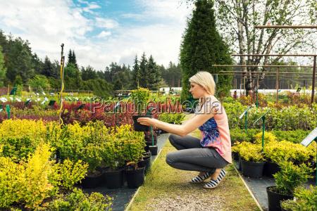 woman chooses barberry bush at plant