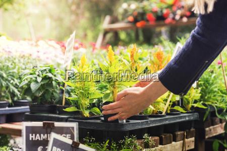 woman pick flower pot at garden