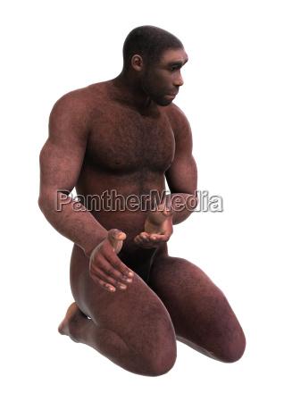 homo erectus 3d wiedergabe auf weiss
