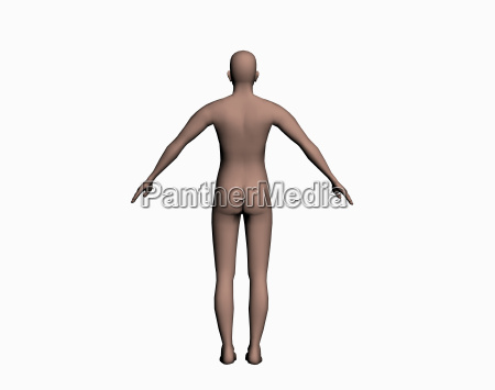 anatomie des mannes freigestellt