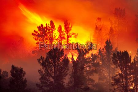 wildfire santa cruz berge monterey bay