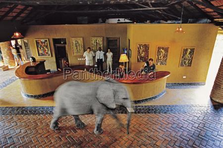 tier saeugetier afrika elefant horizontal hotel