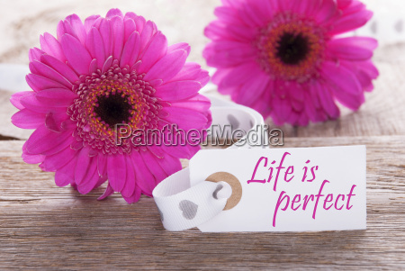 pink spring gerbera label quote life