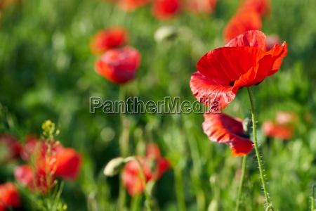 agricolo ambiente giardino fiore pianta fioritura