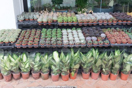 plants in shop