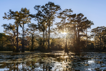 usa texas louisiana caddo lake state
