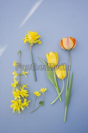 stilleben farbe blume pflanze gewaechs botanik