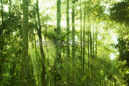 unglaublicher tropischer regenwald
