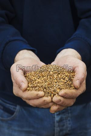 nahaufnahme von menschlichen haenden halten goldenen