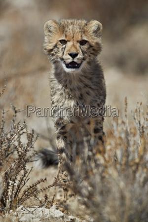 fahrt reisen farbe nationalpark afrika portrait