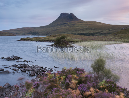 beautiful heather colours at dawn by