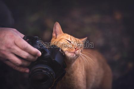 kitty liebt kamera