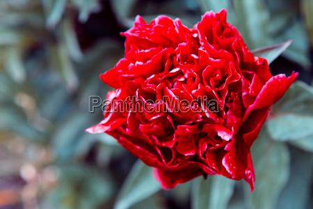 fondo de pantalla floral fondo de
