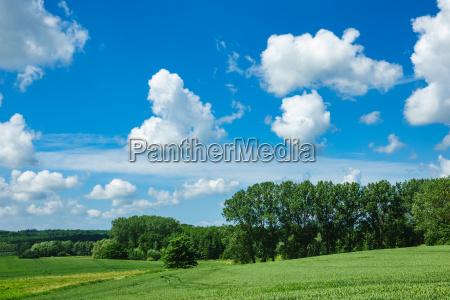 landschaft mit baeumen und wiese