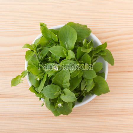 white porcelain bowl with chickweed