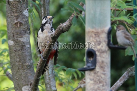 the, spotted, woodpecker, on, the, way - 22193095