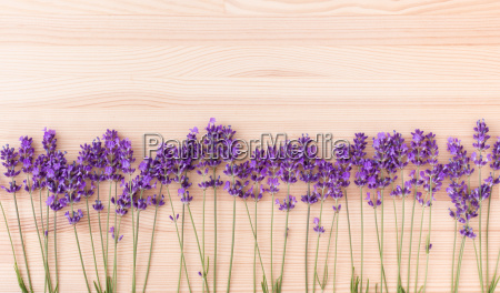 row of lavender blossoms on wood