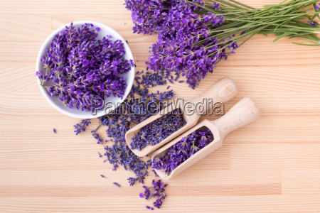 fresh and dried lavender flowers