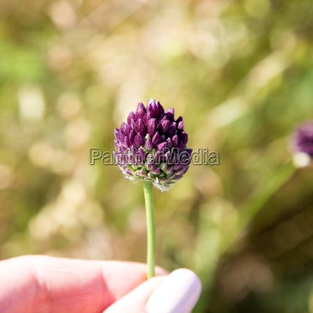 blooming wild flower meadow flower