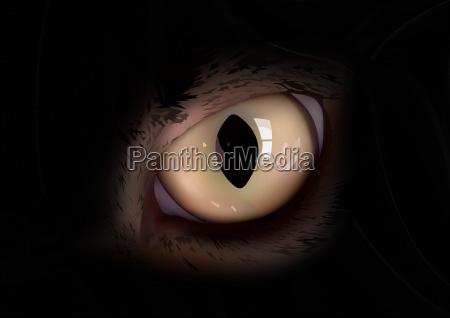cats eye in macro view