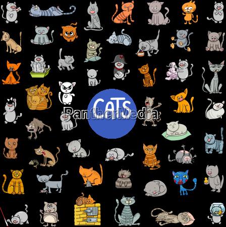 cartoon cat characters large set