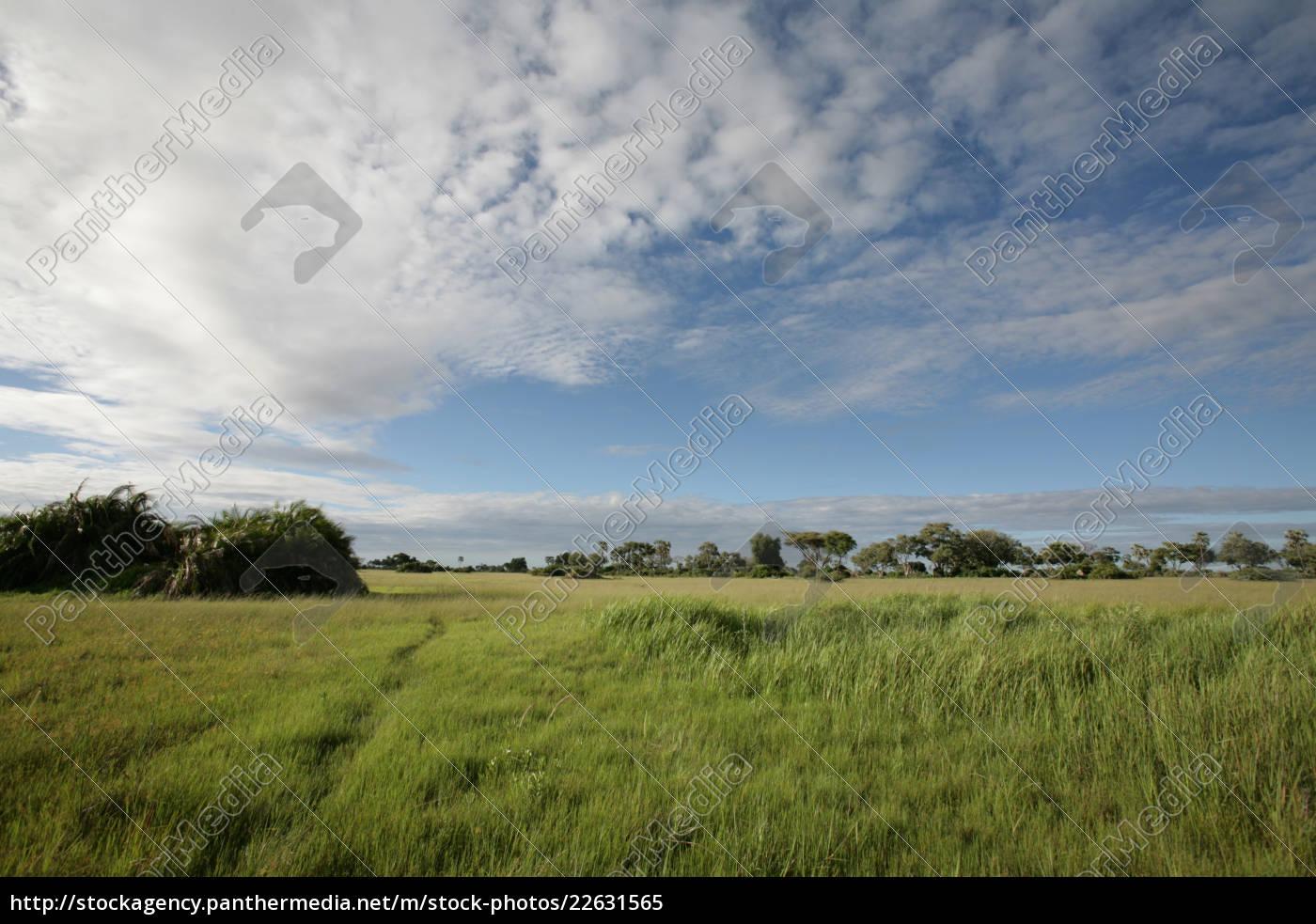 afrikanische, savanne, sommer, pictrures, wilde, safari - 22631565