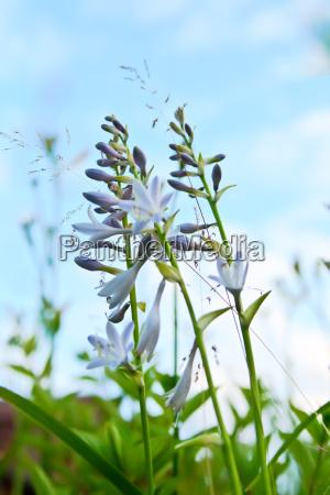blume pflanze gewaechs blumen lila purpur