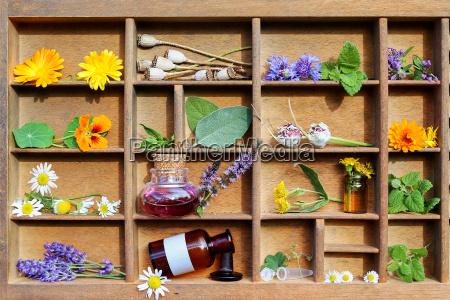 medicinal plants and medicine bottles