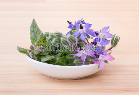 bowl with borage on a