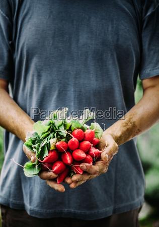 landwirt mit gemuese