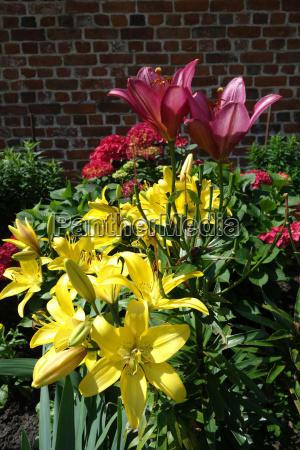 rote und gelbe lilien