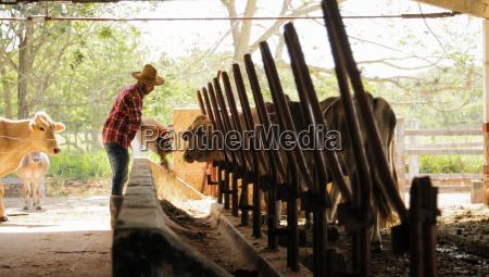 farmer feeding animals peasant man at