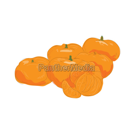 orange apfelsine pomeranze illustration frucht obst
