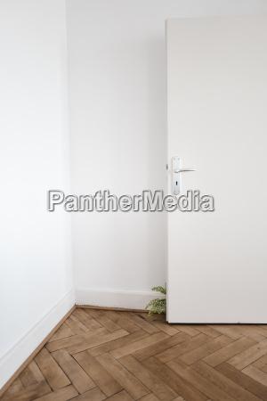inddor plant behind door on wooden