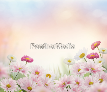 pink and white flowers blossom