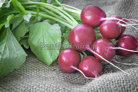 young radishes with green leaves
