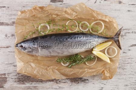 frischer thunfisch auf backpapier