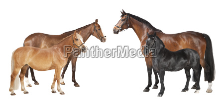 horse breeds various exempted