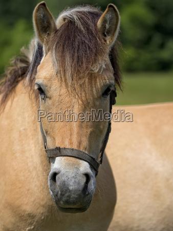 pferd ein portraet