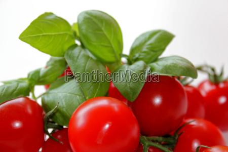 tomaten und basilikum auf weissem hintergrund