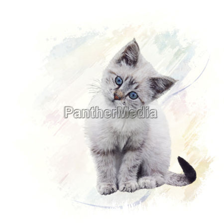 white kitten watercolor