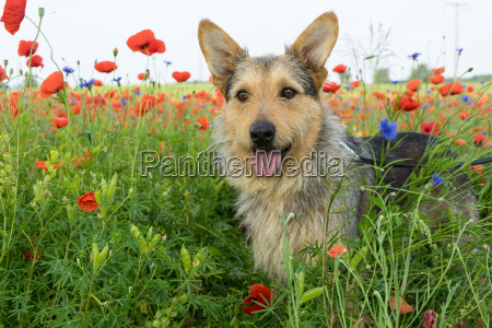 mixed breed dog in a meadow