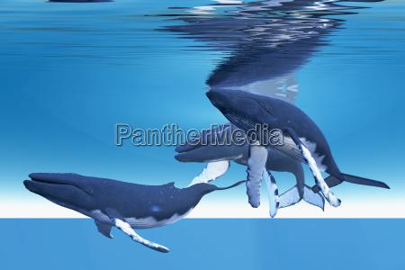 unterwasserwale