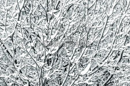 baumzweige mit schnee bedeckt