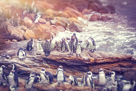 big family of penguins