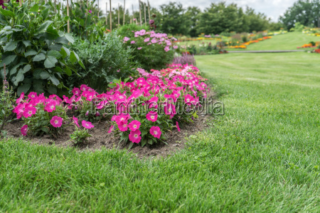 flowerbed with pink flowering flowers and